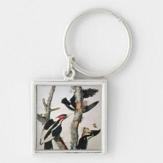Ivory-billed Woodpecker, from 'Birds of America' Keychain