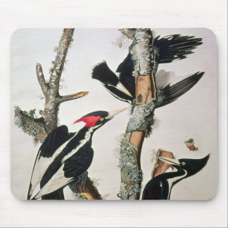 Ivory-billed Woodpecker, from 'Birds of America' Mouse Pad