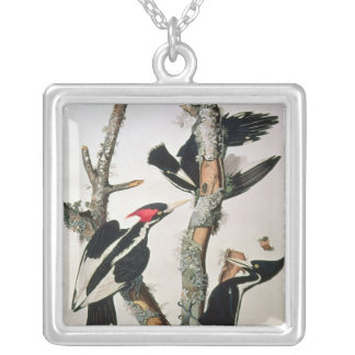 Ivory-billed Woodpecker, from 'Birds of America' Silver Plated Necklace