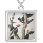 Ivory-billed Woodpecker, from 'Birds of America' Square Pendant Necklace