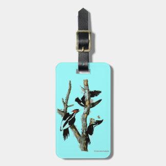 Ivory-billed Woodpecker Luggage Tag