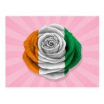 Ivory Coast Rose Flag on Pink Postcard