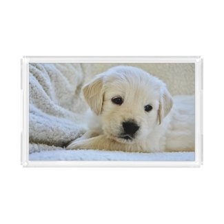 Ivory Cute Labrador Retriever Puppy Dog Acrylic Tray