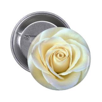 Ivory Rose Pinback Button