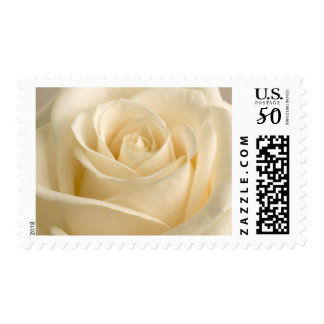 Ivory Rose Wedding Postage