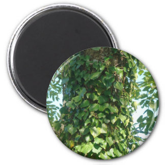 Ivy 2 Inch Round Magnet