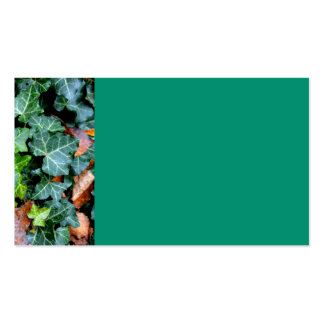 Ivy and Field-stone Business Card