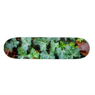 Ivy and Field-Stone Skateboard Deck