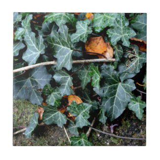 Ivy and Field stone Small Square Tile