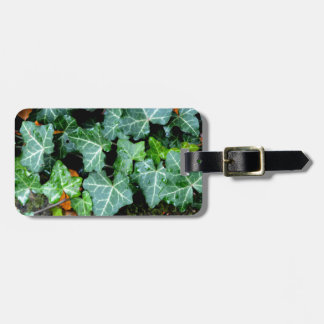 Ivy and Stone Bag Tag