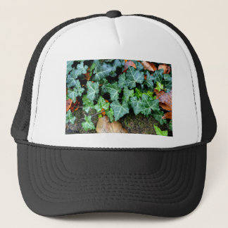 Ivy and Stone Trucker Hat