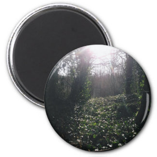 Ivy and Sunbeams. 2 Inch Round Magnet