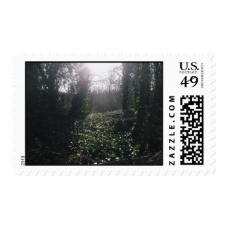 Ivy and Sunbeams Postage