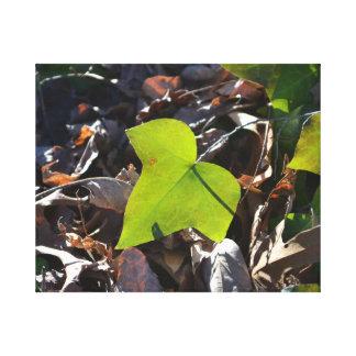 Ivy Leaf Canvas Print