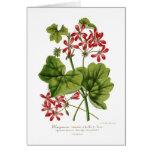 Ivy-leaf Geranium Card