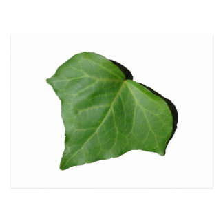 Ivy Leaf Postcard