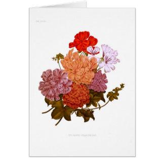 Ivy-leaved Pelargoniums Card