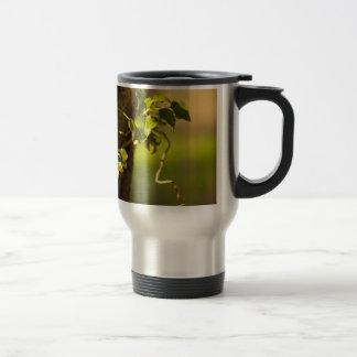 ivy mugs