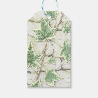 Ivy on a Dry Stone Wall in Pencil Gift Tags