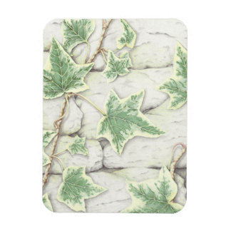 Ivy on a Dry Stone Wall in Pencil Photo Magnet