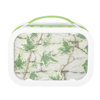 Ivy on Dry Stone Wall in Pencil Yubo Lunchbox