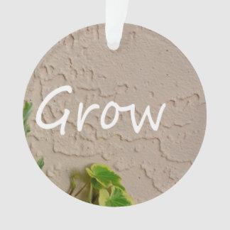 ivy on left word grow garden design neat nature