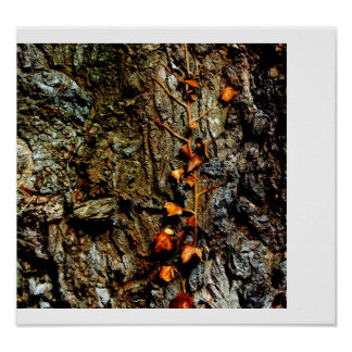 Ivy on Tree Bark Poster