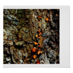 Ivy on Tree Bark Posters