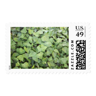 Ivy Postage Stamps