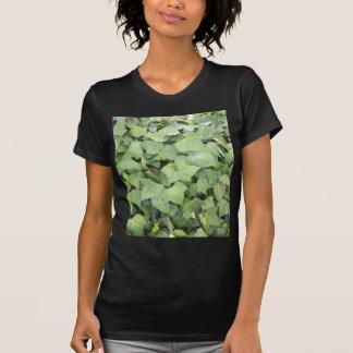 Ivy Shirts