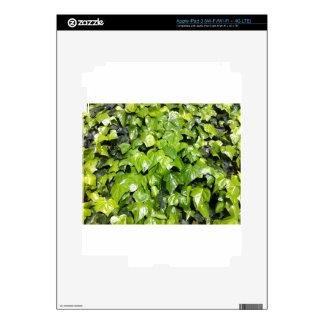 Ivy iPad 3 Decal