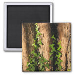 Ivy Square Magnet
