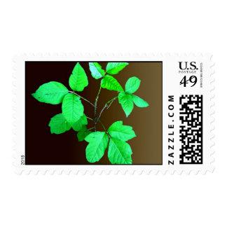 ivy stamp