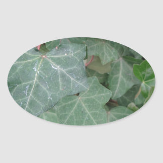 Ivy Tree Oval Sticker