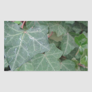 Ivy Tree Rectangular Sticker