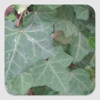 Ivy Tree Square Sticker