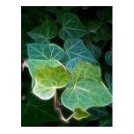 Ivy Vine 14 Postcard