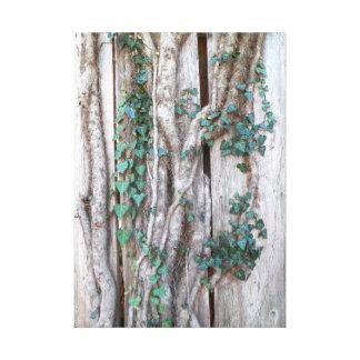 Ivy & Vines on Wood Fence Canvas