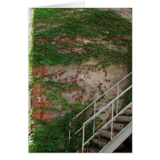 Ivy Vines, Stairs, Brick Wall card