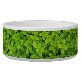 Ivy Wall Background Bowl