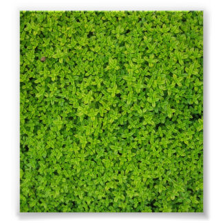 Ivy Wall Background Poster