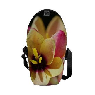 Ixia Bright Mini Messenger Bag Outside Print