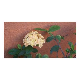 Ixora Casei - flores amarillo claro Tarjeta Fotografica Personalizada