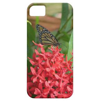 ixora Shrub Iphone5 Case iPhone 5 Case