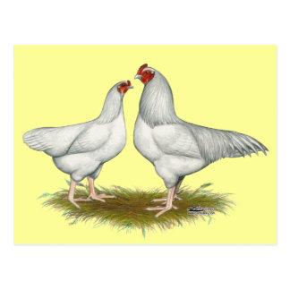 Ixworth Chickens Postcard