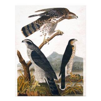 J.J. Audubon (azor, halcón) de Stanley (1829) Plantillas De Membrete