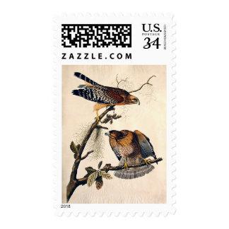 J.J. Audubon (halcón llevado a hombros rojo) Sello Postal