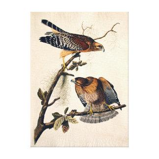 J.J. Audubon (Red Shouldered Hawk) (1829) Canvas Print