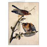 J.J. Audubon (Red Shouldered Hawk) (1829) Card