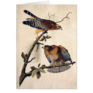 J.J. Audubon (Red Shouldered Hawk) (1829) Card